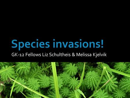 GK-12 Fellows Liz Schultheis & Melissa Kjelvik. What is an invasive species?  Introduced from another country by people  Grows and takes over an area.