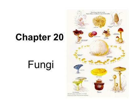 Chapter 20 Fungi. How are mushrooms, yeast, and athlete's foot similar? They are all fungi.