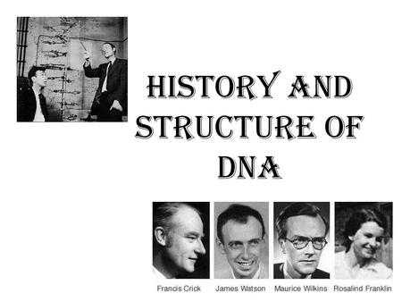 History and Structure of DNA. Thomas Hunt Morgan (1904) Discovered that genes are on chromosomes, but didn't know if it was the protein or DNA part of.