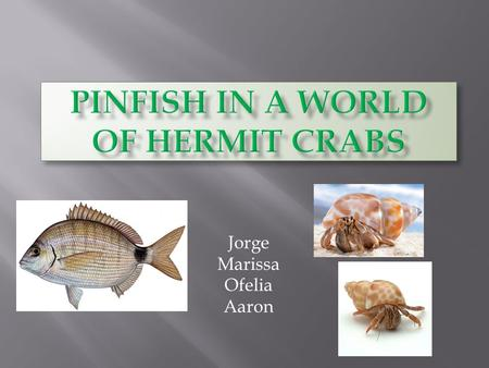 Jorge Marissa Ofelia Aaron.  What will happen to a pinfish when taken away from its environment and is its place into a tank full of hermit crabs?