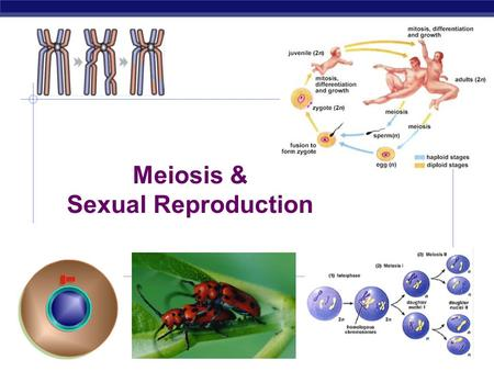 Meiosis & Sexual Reproduction Cell division / Asexual reproduction  Mitosis  produce cells with same information  identical daughter cells  exact.