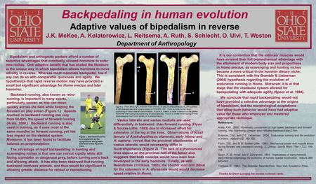 Bipedalism and orthograde posture afford a number of selective advantages that eventually allowed hominins to enter new niches. One adaptive benefit that.