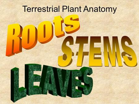 Terrestrial Plant Anatomy. Plants moved from water to land but there were challenges along the way… Challenge Adaptation Getting water and minerals into.