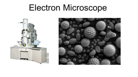 Electron Microscope. How do they work Instead of using light they fire a beam of electrons (which have a wavelength less than 1nm compared to light which.