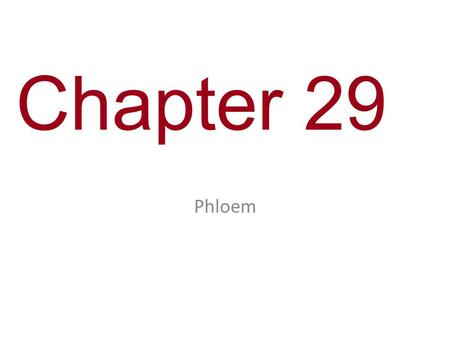Chapter 29 Phloem. You Must Know How bulk flow affects movement of solutes in plants.