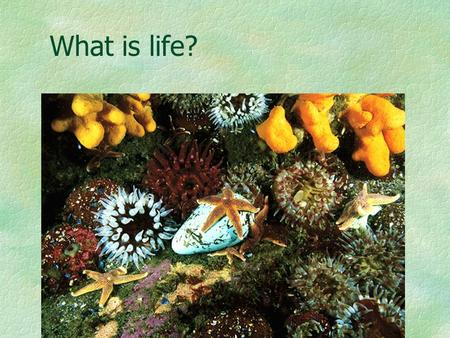 What is life?. Characteristics of Living Things Cellular Organization Contain similar chemicals Use energy Grow and develop Reproduce Respond to their.