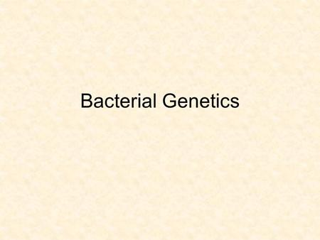 Bacterial Genetics. Vocabulary Binary fission Exponential growth Gram positive Gram negative Pathogen Antibiotic Selection pressure Adaptation Mutation.