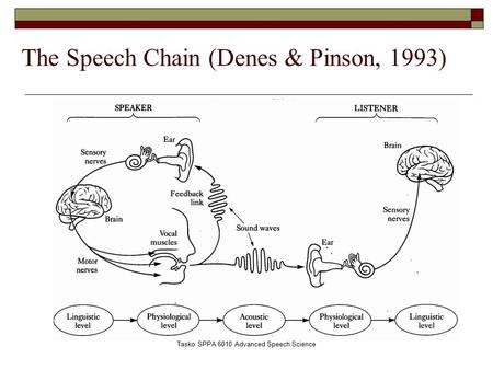 Tasko SPPA 6010 Advanced Speech Science The Speech Chain (Denes & Pinson, 1993)