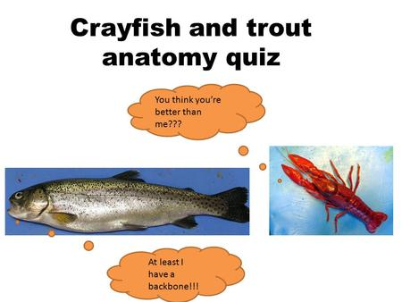 Crayfish and trout anatomy quiz You think you're better than me??? At least I have a backbone!!!