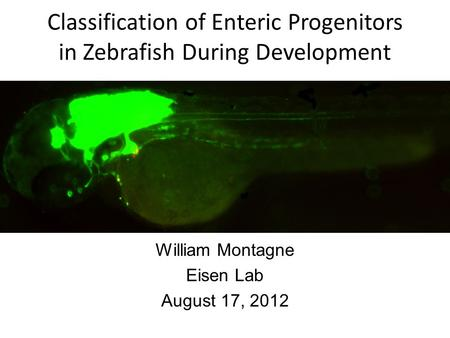 Classification of Enteric Progenitors in Zebrafish During Development William Montagne Eisen Lab August 17, 2012.