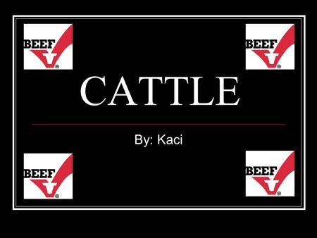 CATTLE By: Kaci. Food Veal Beef Different Cuts of Beef Hamburger Hot dogs Chewing Gum Sausage Marshmallows Mayo.