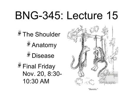 BNG-345: Lecture 15 The Shoulder Anatomy Disease Final Friday Nov. 20, 8:30- 10:30 AM.