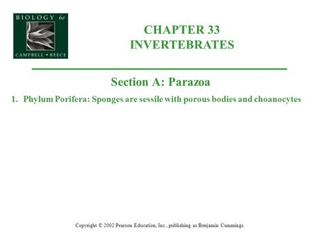 CHAPTER 33 INVERTEBRATES Copyright © 2002 Pearson Education, Inc., publishing as Benjamin Cummings Section A: Parazoa 1.Phylum Porifera: Sponges are sessile.