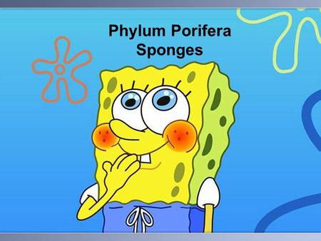 Phylum Porifera Sponges. PHYLUM PORIFERA Sponges oldest of all animals few specialized cells sessile – can't move.