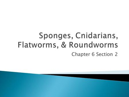 Chapter 6 Section 2.  Fun Fact: For a long time, scientists thought sponges were plants, not animals.  Adult sponges are sessile- remain attached to.
