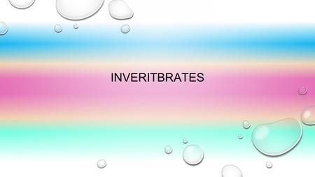 INVERITBRATES. SPONGES SPONGES HAVE PORES ALL OVER THERE BODY.WITH THOSE PORES THE WATER GOES IN AND OUT OF THE PORES. AND THAT ALLOWS THEM TO BREATH.