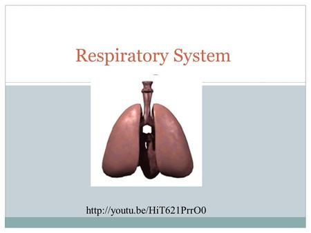Respiratory System  TO EXCHANGE OXYGEN AND CARBON DIOXIDE BETWEEN THE BLOOD, THE AIR AND TISSUES. Function of the Respiratory.