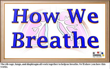 The rib cage, lungs, and diaphragm all work together to help us breathe. We'll show you how this works.