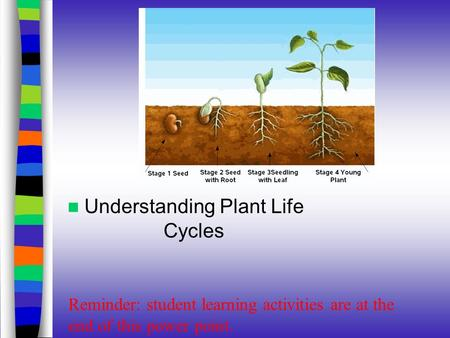 Understanding Plant Life Cycles Reminder: student learning activities are at the end of this power point.