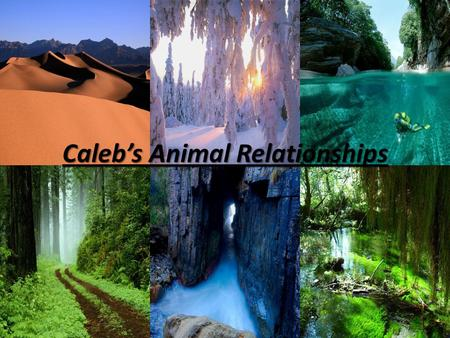 Caleb's Animal Relationships. Forest Mutualism –bee pollinating a flower. Parasitism – snake eating a rabbit. Commensalism- squirrel living in a tree.