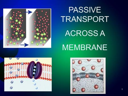 1 PASSIVE TRANSPORT ACROSS A MEMBRANE. Passive & Active Transport Overview Cell Transport Passive Transport DiffusionOsmosis Facilitated Diffusion Active.