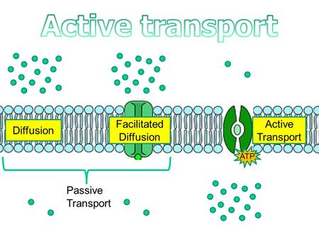 Diffusion Facilitated Diffusion Active Transport ATP Passive Transport.