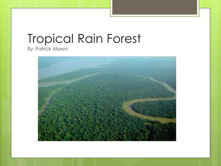 Tropical Rain Forest By: Patrick Mawn. Where are they located?  South America  Africa  Southeast Asia  Between the Tropic of Cancer and Tropic of.