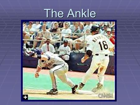 The Ankle.