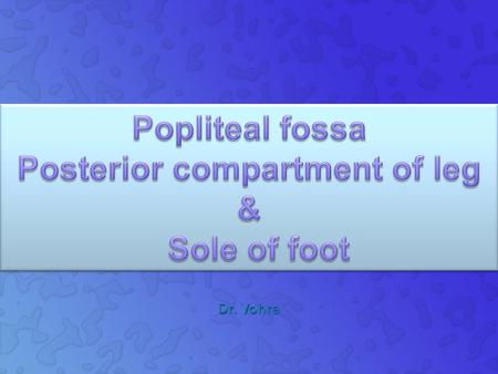 Popliteal fossa Posterior compartment of leg & Sole of foot