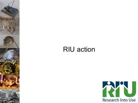 RIU action. Rat Management for Rural Communities 1) Training and capacity building of institutions 2) Training and capacity building of communities 3)