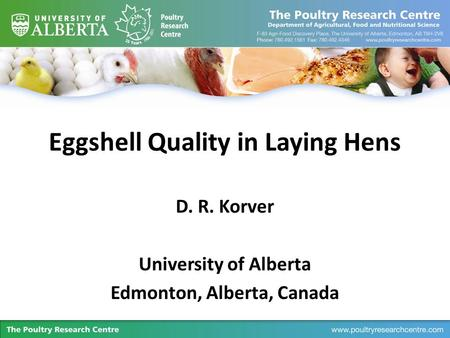 Eggshell Quality in Laying Hens D. R. Korver University of Alberta Edmonton, Alberta, Canada.