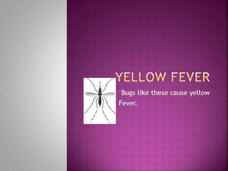 Bugs like these cause yellow Fever.. Yellow fever is a tropical disease that is spread to humans by infected mosquitoes. Many yellow fever infections.