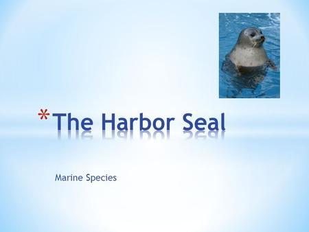Marine Species. * Harbor seals are residents of Point Reyes, they might be sighted year round both on land and in near shore waters. * Some seals also.