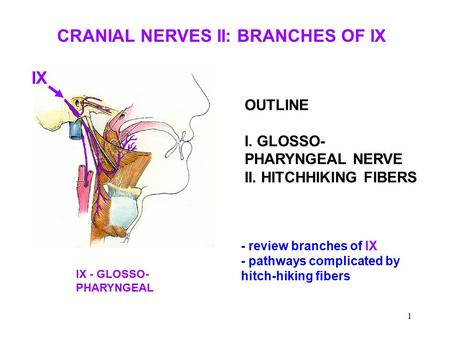 CRANIAL NERVES II: BRANCHES OF IX