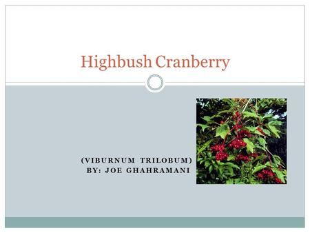 (VIBURNUM TRILOBUM) BY: JOE GHAHRAMANI Highbush Cranberry.