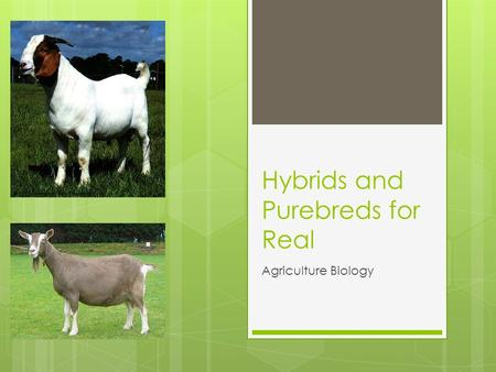 Hybrids and Purebreds for Real Agriculture Biology.