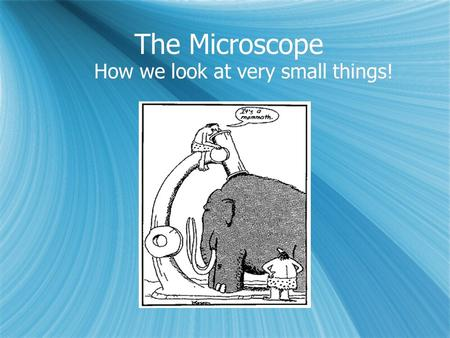 The Microscope How we look at very small things!