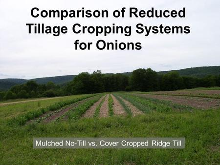 Comparison of Reduced Tillage Cropping Systems for Onions Mulched No-Till vs. Cover Cropped Ridge Till.