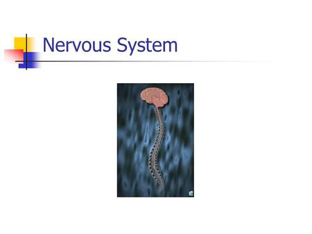 Nervous System. Function of the nervous system Transmits stimuli to the brain (sound, sight, taste, smell, feel) Processes information (thinks) Responds.