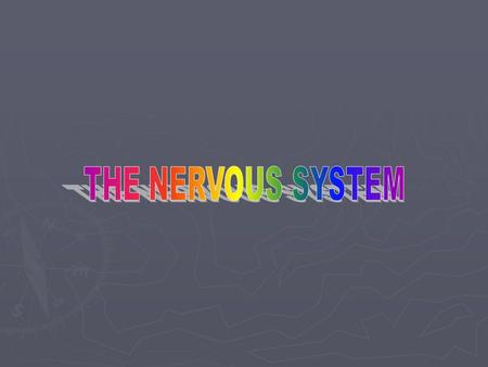 Nervous System Divisions ► Central Nervous System and Peripheral NS ► Afferent Division and Efferent Division ► Somatic and Autonomic NS Autonomic: