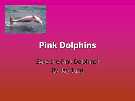 Pink Dolphins Save the Pink Dolphins! By Jay Jung.