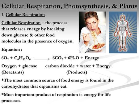 Cellular Respiration, Photosynthesis, & Plants