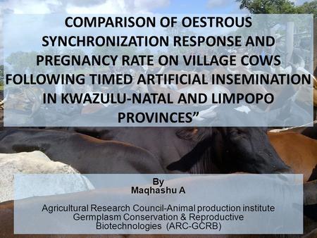 COMPARISON OF OESTROUS SYNCHRONIZATION RESPONSE AND PREGNANCY RATE ON VILLAGE COWS FOLLOWING TIMED ARTIFICIAL INSEMINATION IN KWAZULU-NATAL AND LIMPOPO.