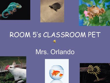 ROOM 5's CLASSROOM PET Mrs. Orlando ROOM 5 WILL BE GETTING A CLASS PET!!!!! As a class, we will be picking a pet, I will be going out and purchasing.