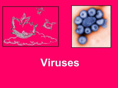 Viruses. What is a virus? Are tiny! Can infect a bacterium. 5 billion viruses can fit into one drop of blood!! Virus can change often –This makes them.