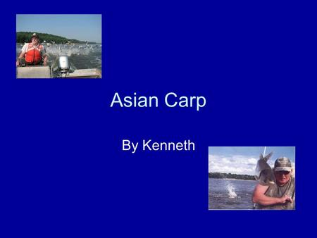 "Asian Carp By Kenneth. Description Grass, Silver, Black and Bighead carp are known as the ""4 domesticated fish"" in China. They are the most important."