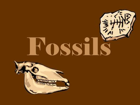 Fossils. What are fossils? The remains of once living things that died long ago.