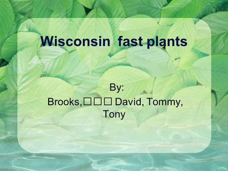 Wisconsin fast plants By: Brooks, David, Tommy, Tony.