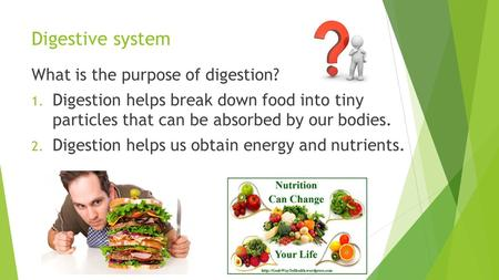 Digestive system What is the purpose of digestion? 1. Digestion helps break down food into tiny particles that can be absorbed by our bodies. 2. Digestion.