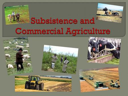 SUBSISTENCECOMMERCIAL Production of food primarily for consumption by the farmer's family.  Practiced primarily in developing countries  Production.
